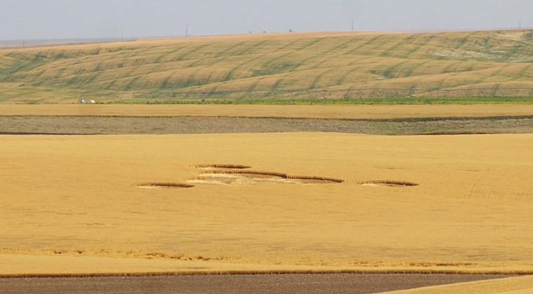 Image:Crop circles are seen in a wheat field owned by Greg and Cindy Geib near Wilbur, Wash., on July 30.