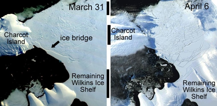 This before and after image shows the collapse of the ice bridge connecting the remainder of Wilkins Ice Shelf to Charcot Island.