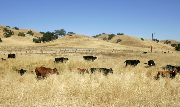 Image: Cattle are shown on Joe Gonzales' ranch in Gilroy, California