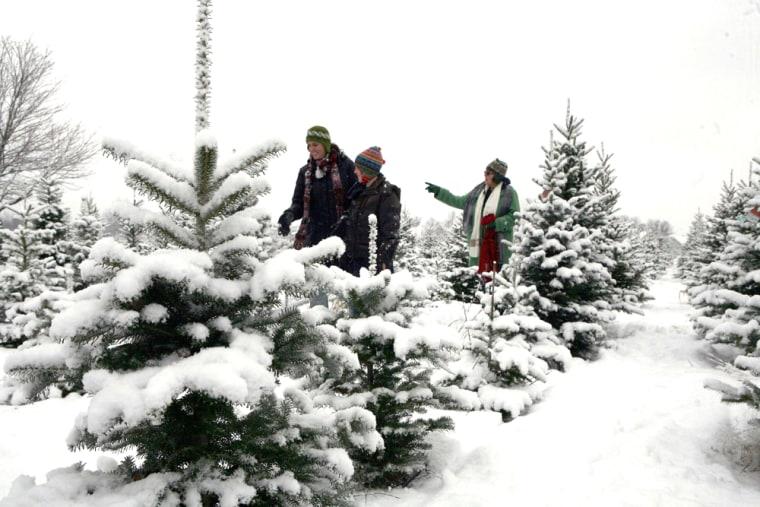 Image: Christmas tree farm