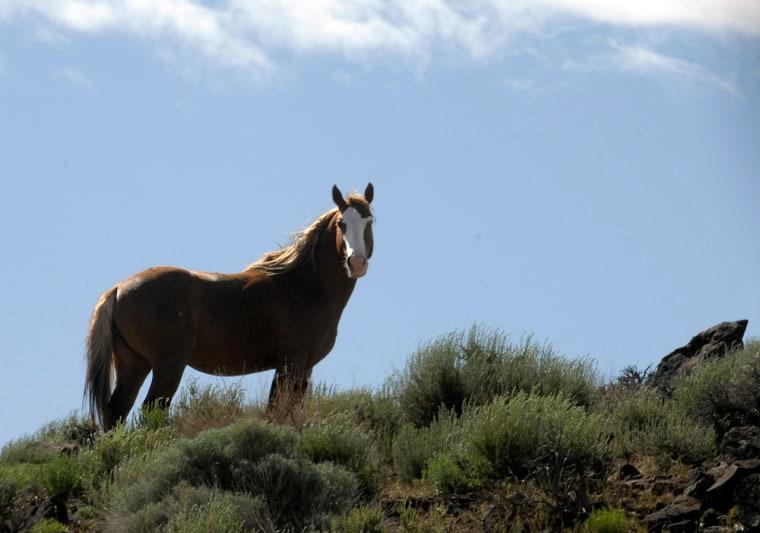 Image: A wild stallion