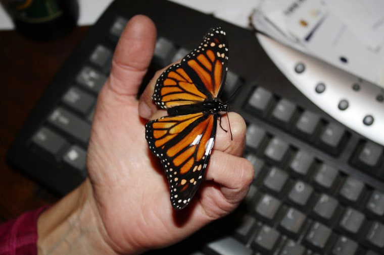 Image: Butterfly