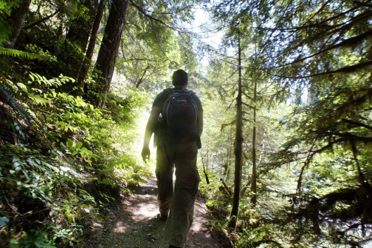 Christopher Mock of Los Angeles hikes the Salmon River Trail in the Mt. Hood National Forest, outside Zig Zag, Ore.