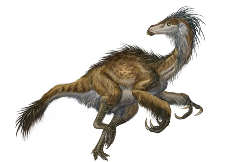Image: Feathered dinosaur