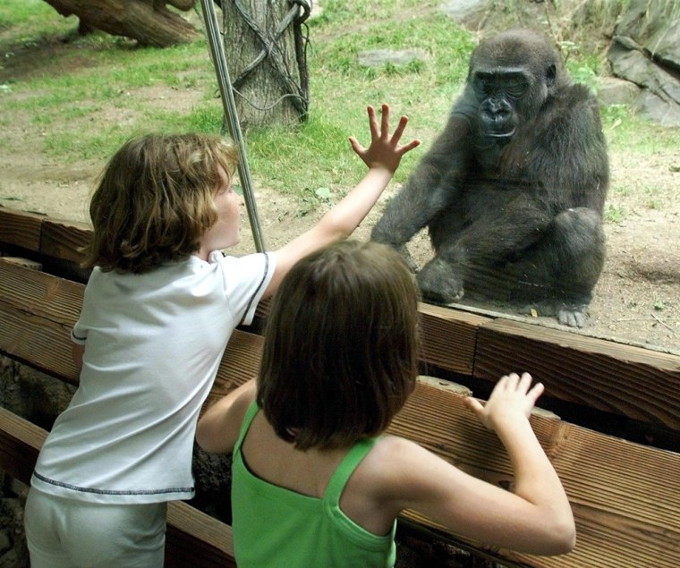Image: Children visiting the Congo Gorilla Forest