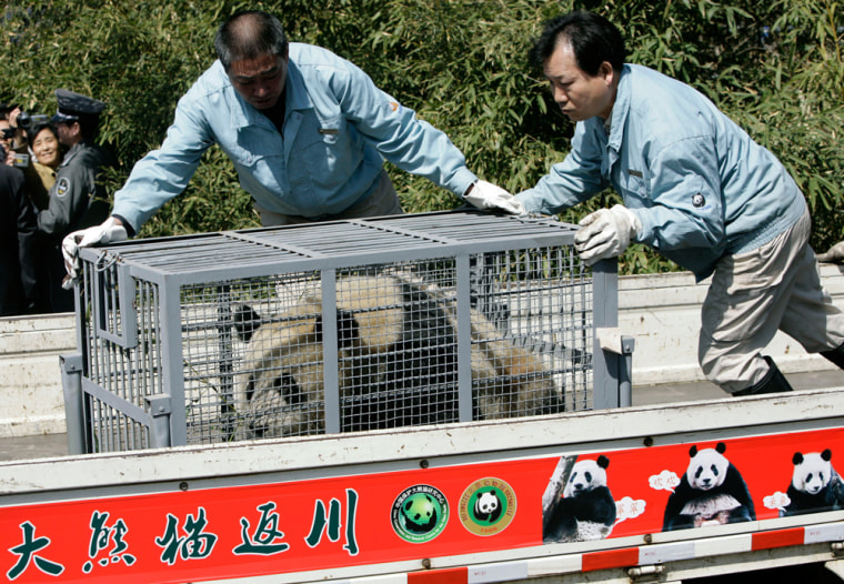 Image: A giant panda is placed in a vehicle for transfer out of Beijing Zoo