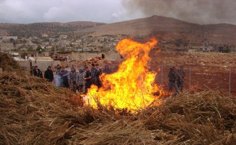 Image: Lebanese policemen stand guard as they burn tonnes of cannabis in Deir al-Ahmar in the Bekaa region of eastern Lebanon