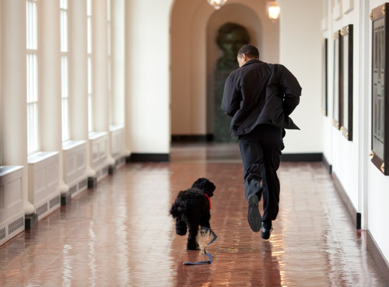 Image: Obama and Bo