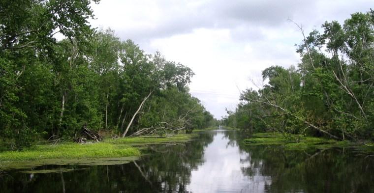 Image: Jean Lafitte Swamp