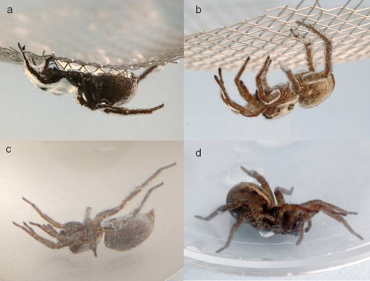 Image: reanimated spiders