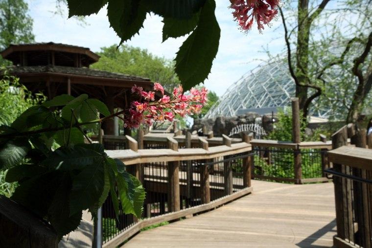 Image: Children's garden at Missouri Botanical Garden