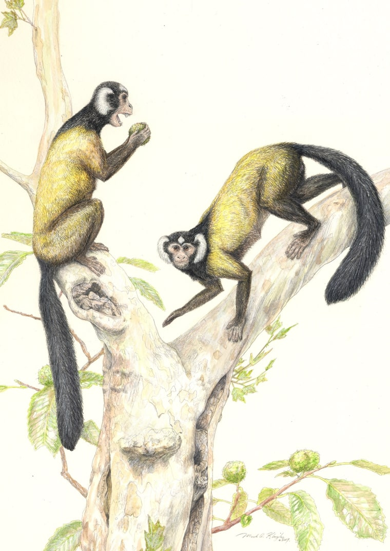 Illustration: Fossil primate