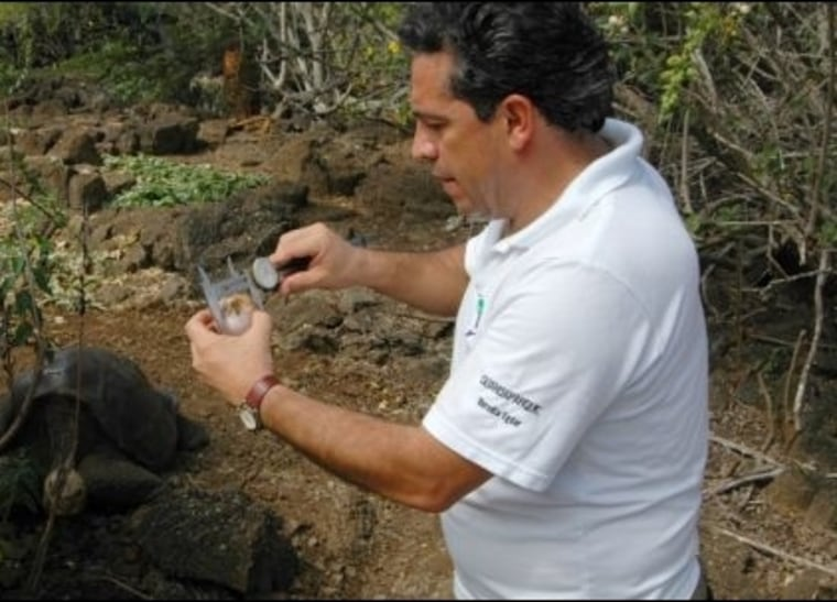 Edgar Muñoz, director of the Galapagos National Park, measures one of the five eggs laid by one of Lonesome George's companions.
