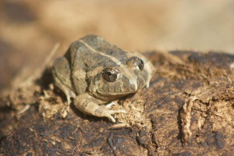 Image: Frog