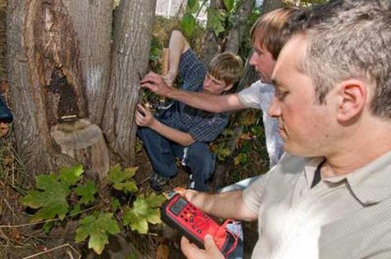 Image: Tree poewr