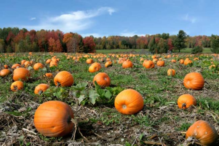 The United States' major pumpkin states produce over one billion pounds worth of pumpkins annually.