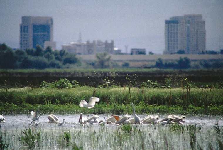 The Sacramento-San Joaquin Delta, whichborders urban areas, is at the center of a new state water plan.