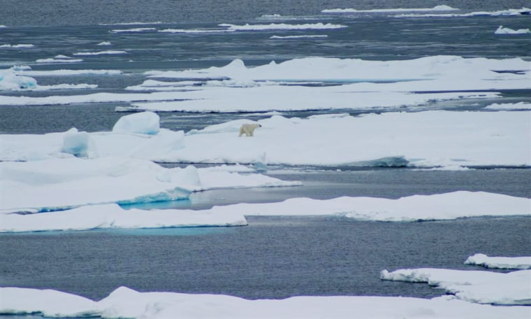 A polar bear makes its way on sea ice off the Beaufort Sea in September 2008.