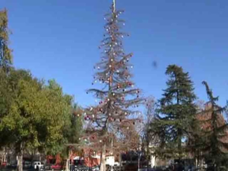 Officials said budget woes forced them to forgo a freshly cut, full-bodied tree for one that was already growing in a city plaza.