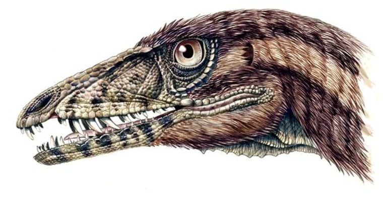The snout of a bipedal meat-eating dinosaur known as Tawa hallae was likely covered with scalelike structures, as shown in this artist's reconstruction. Primitive feathers probably covered its head and body.