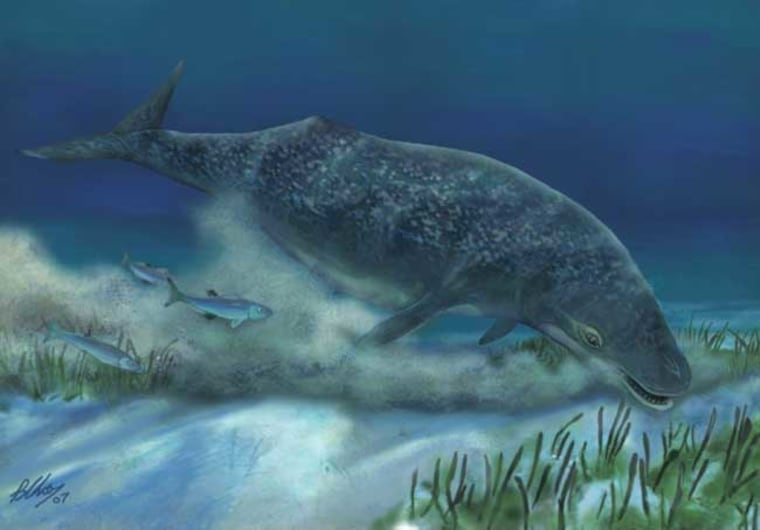 The primitive whale Mammalodon colliveri might have sucked up prey from seafloor mud, suggesting the origin of today's giant filter-feeding whales.