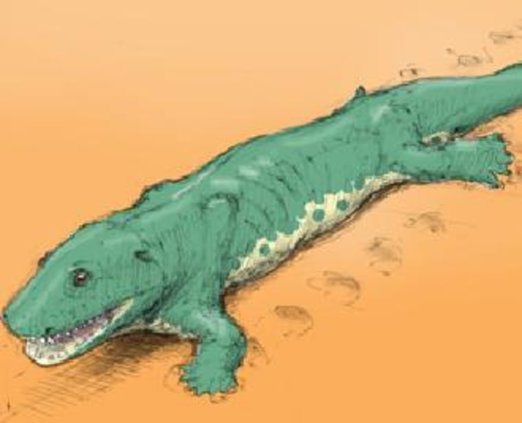 This sketch shows a Devonian tetrapod making tracks. The depiction is based on a Greenland species from the Late Devonian but is a reasonable approximation of the creature that made footprints in Poland.