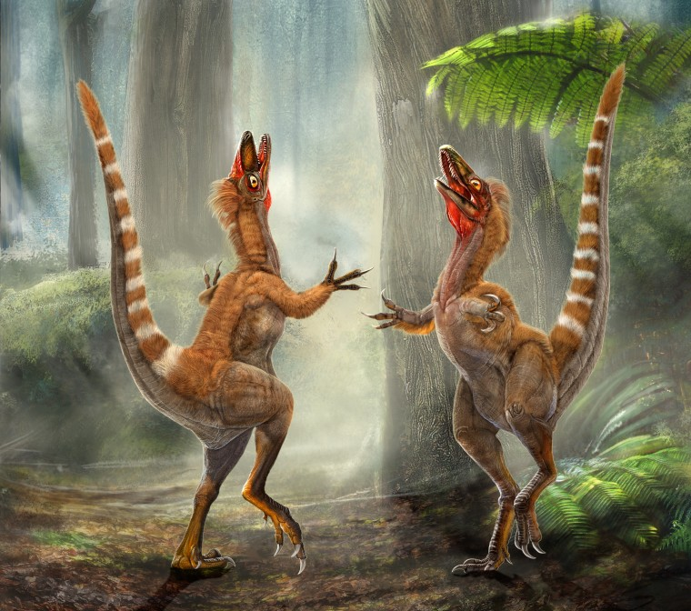 Image: Sinosauropteryx