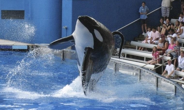 Image: SeaWorld performance