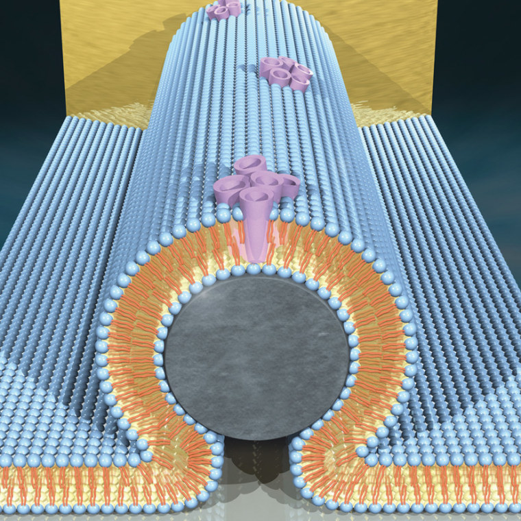 Image: Bio-transistor