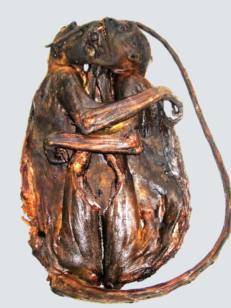 Image: A species of primate which was smoked prior to transportation