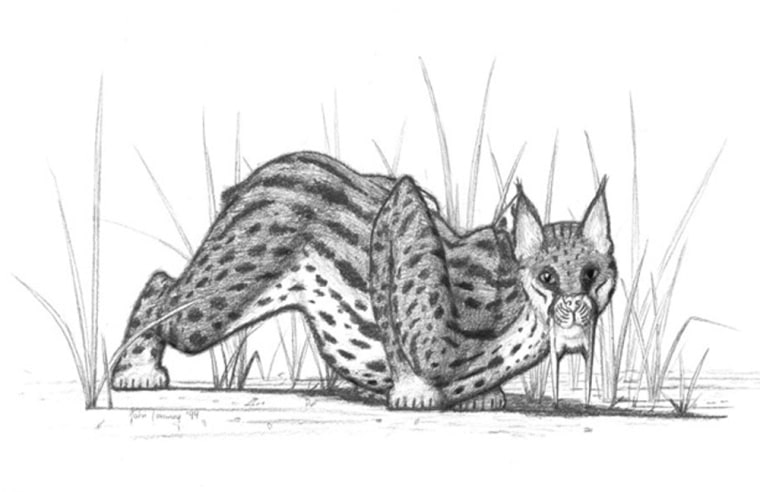 Image: Saber-toothed cat