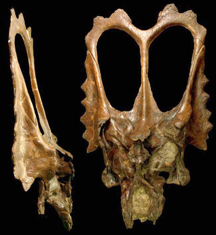 Image: Dinosaur skull