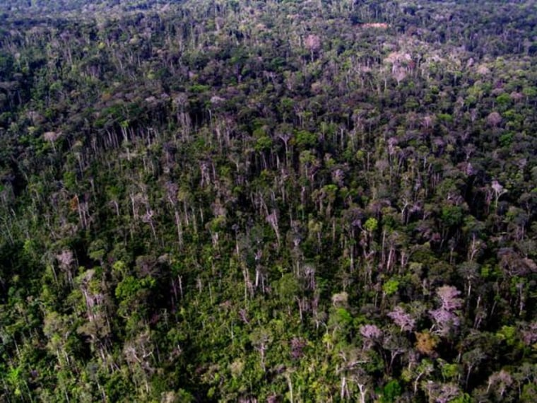 Trunks of living trees can be seen two years after a 2005 storm toppled many others, tearing open what was aclosed, green canopyin this stretch of Amazon forest near Manaus, Brazil.
