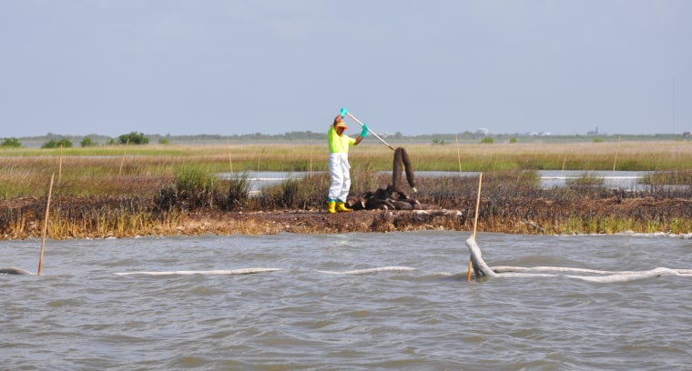 An oil spill worker handles an oil-soaked boom in a marsh off of Cocodrie, La., on July 13. About 234 miles of the Gulf's marsh coastline have been hit by oil.