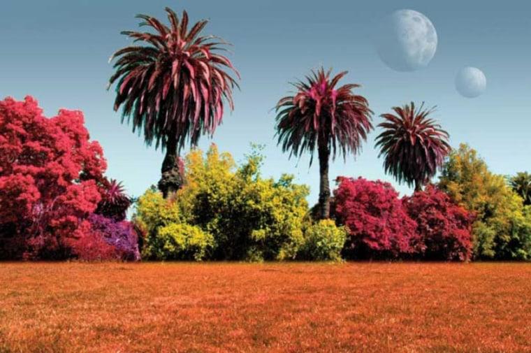 Image: Artist's rendition of alien plants, in different colors