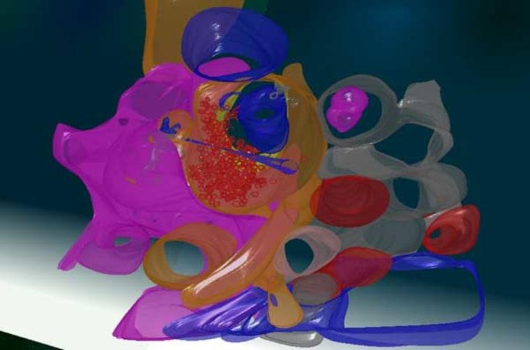 Image: 3-D model of a region of the cerebellum.