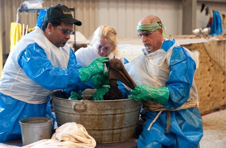 Image: Volunteers clean oiled bird