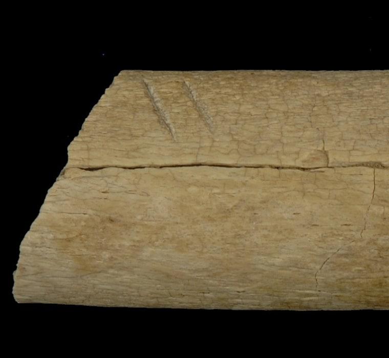 Image: Cut marks