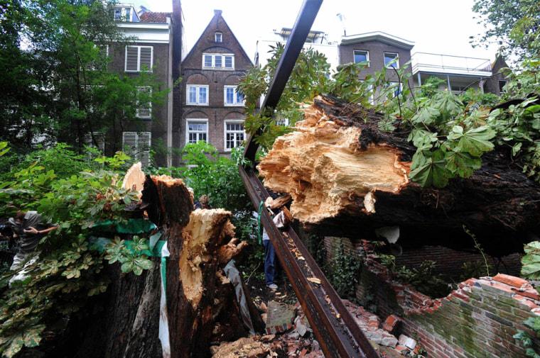 Image: Anne Frank's chestnut tree falls