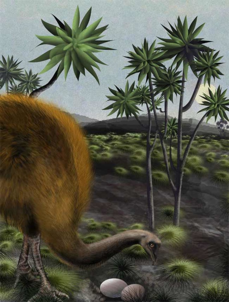 Image: Illustration of moa with eggs
