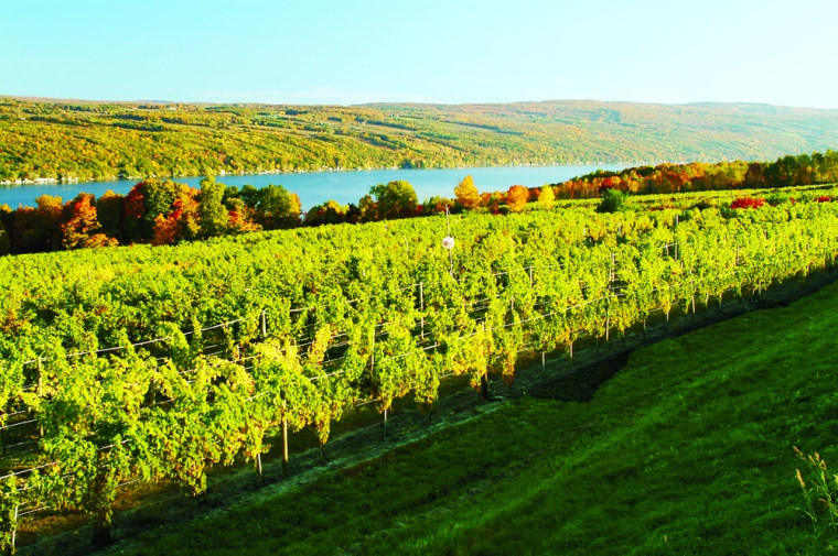 Image: Vineyards in Hammondsport, N.Y.