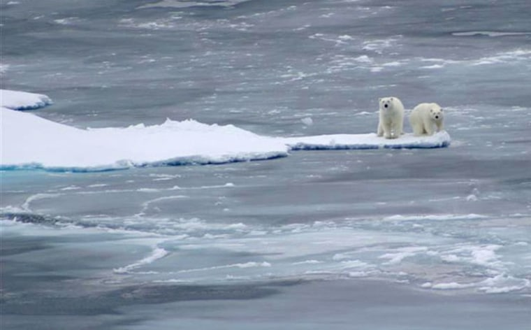 Image: Polar bears on sea ice