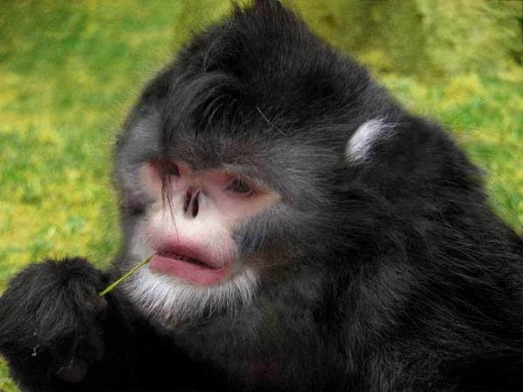 Image: Reconstruction of monkey image