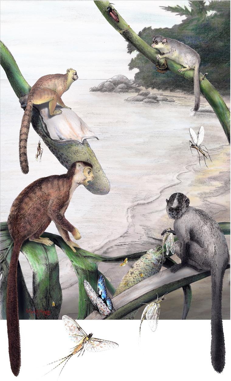 Image: Primate reconstruction