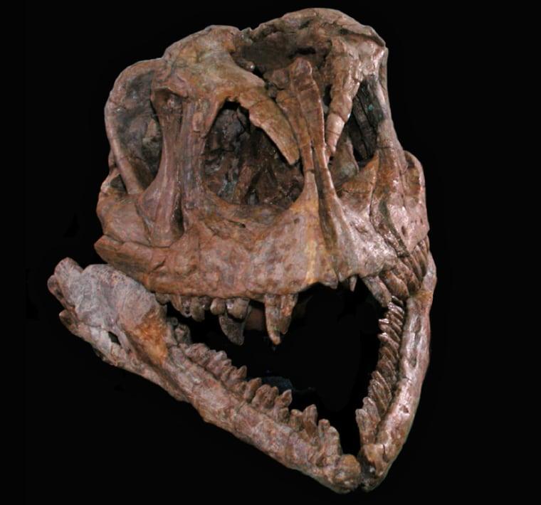 Image: Yizhousaurus skull