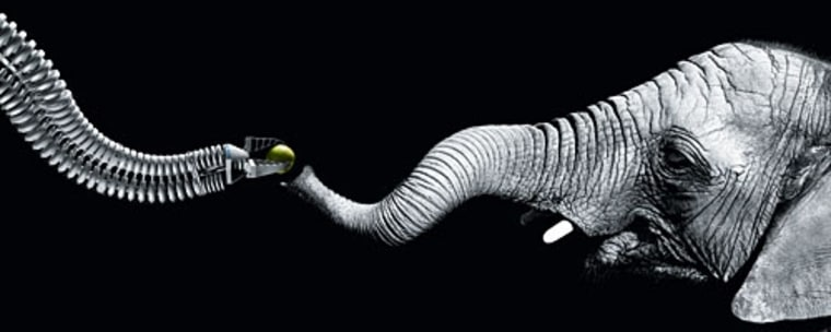 Image: Robotic arm and elephant's trunk