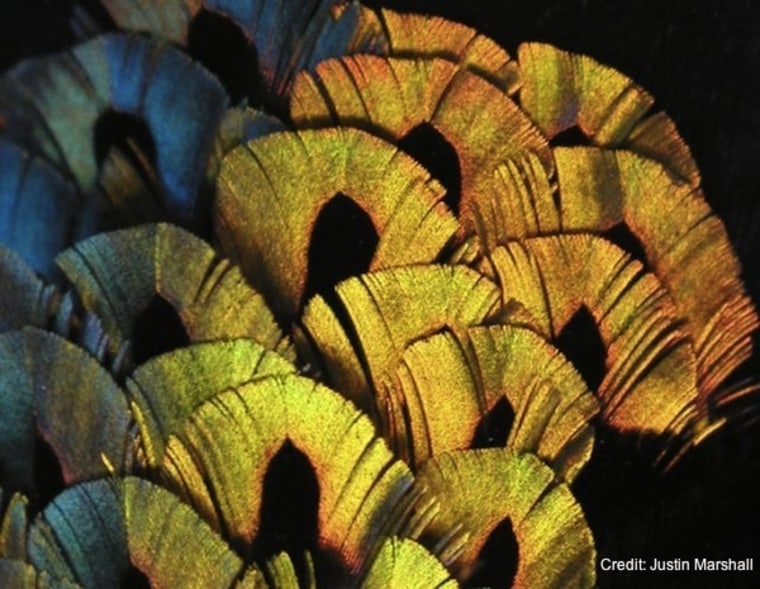 Image: feathers of a bird