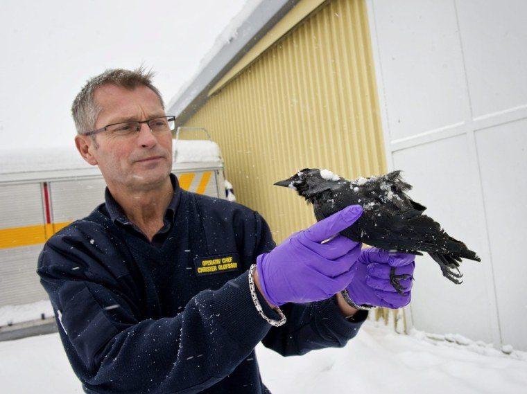 Image: Rescue chief Christer Olofsson poses with a dead bird in Falkoping