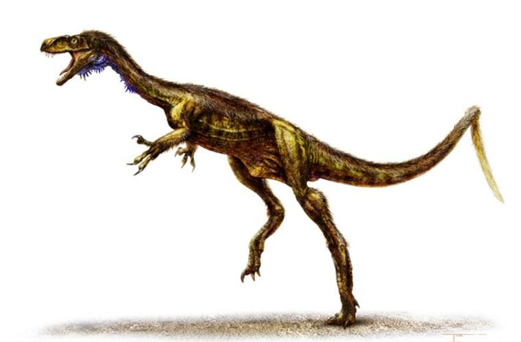 Image: Illustration of Eodromaeus