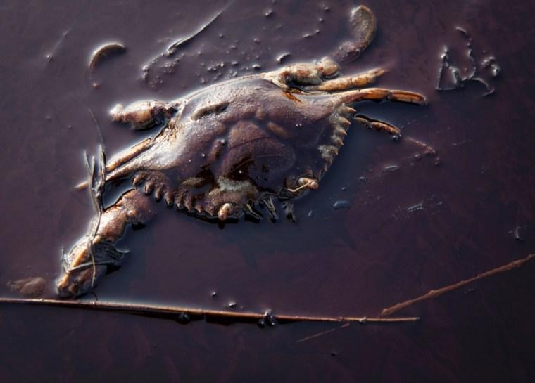 Image:  Dead crab